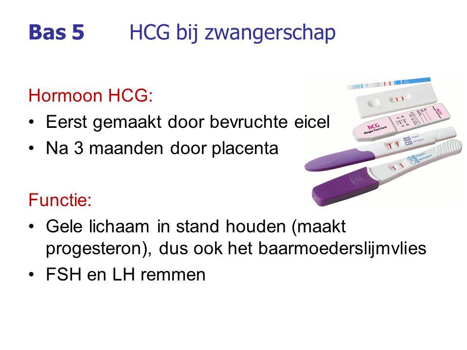 Bas 5 HCG bij zwangerschap