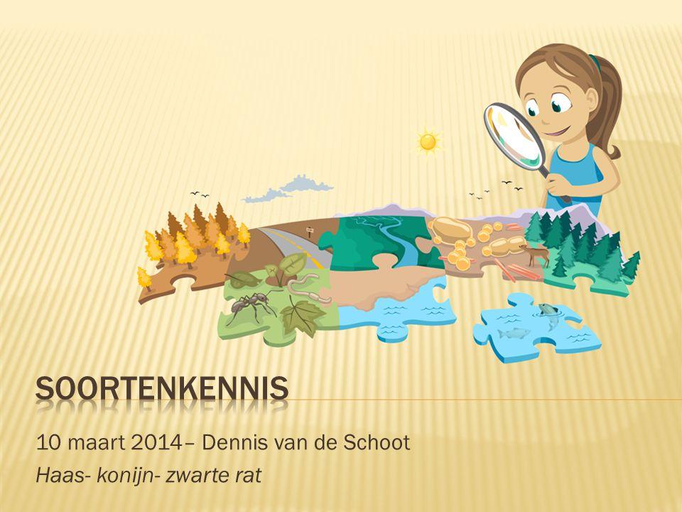 10 maart 2014– Dennis van de Schoot Haas- konijn- zwarte rat