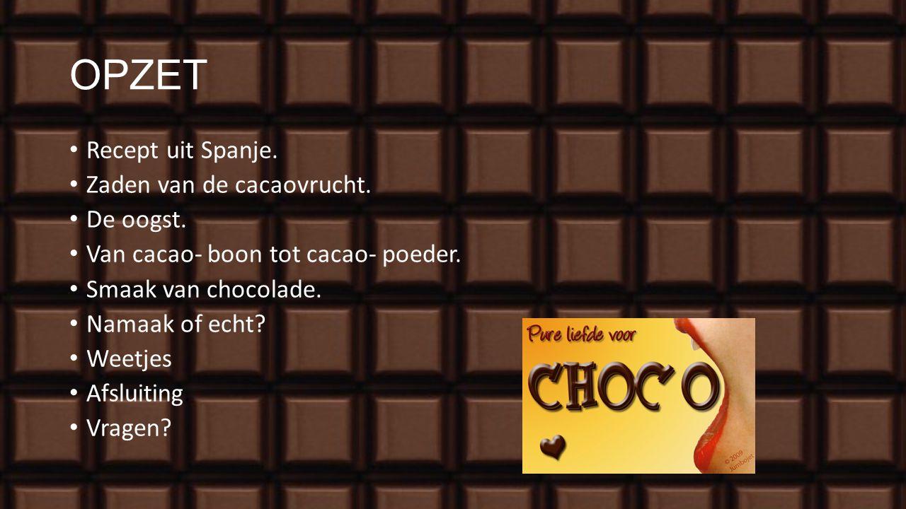 OPZET Recept uit Spanje. Zaden van de cacaovrucht. De oogst.