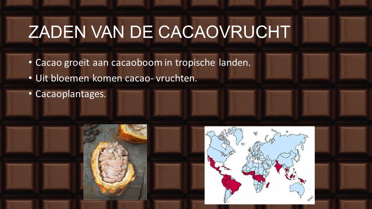 ZADEN VAN DE CACAOVRUCHT