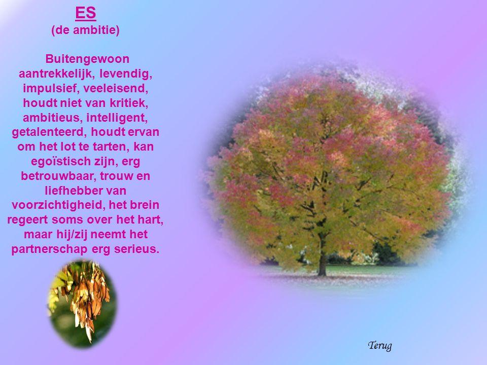 ES (de ambitie)