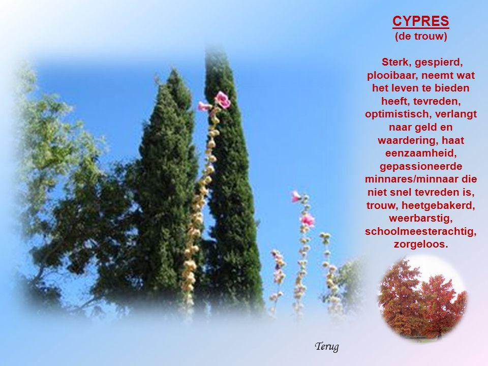 CYPRES Terug (de trouw)