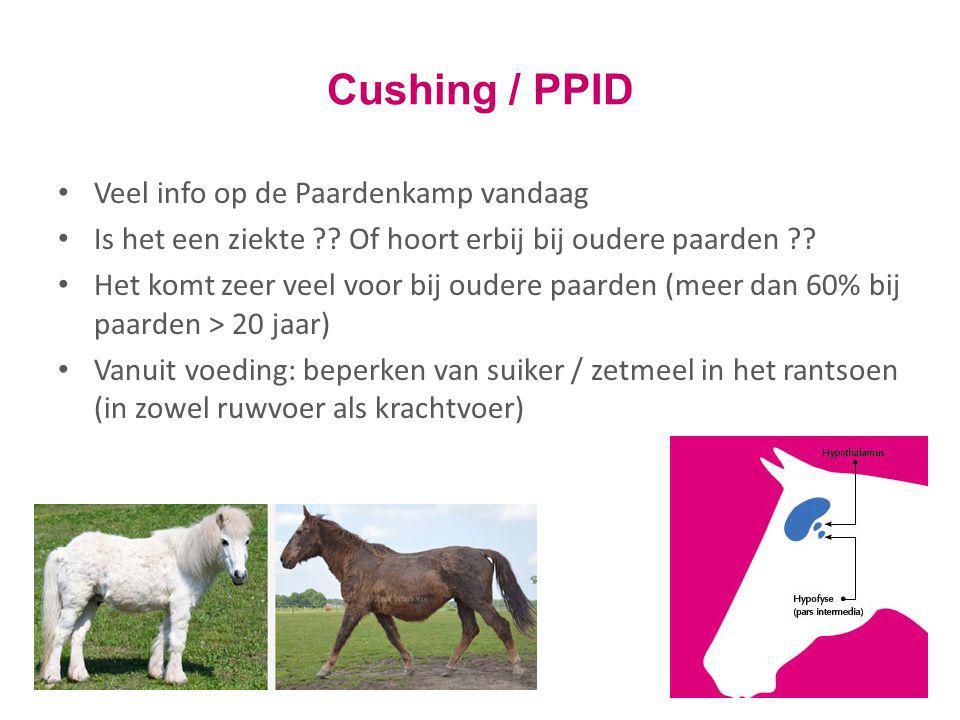 Cushing / PPID Veel info op de Paardenkamp vandaag