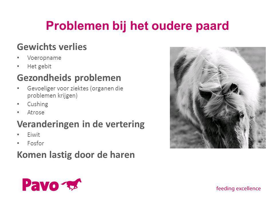 Problemen bij het oudere paard