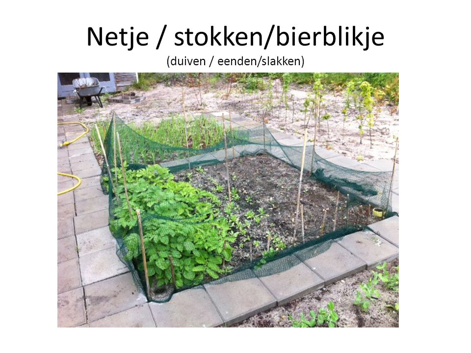 Netje / stokken/bierblikje (duiven / eenden/slakken)