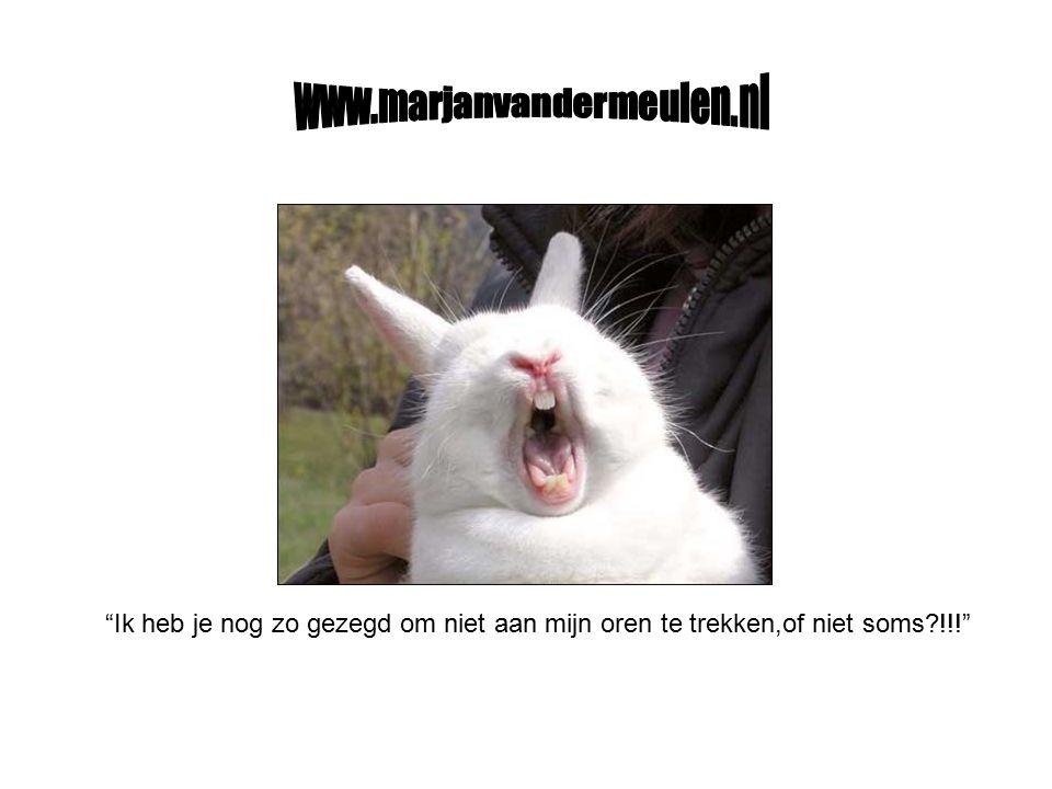 www.marjanvandermeulen.nl Ik heb je nog zo gezegd om niet aan mijn oren te trekken,of niet soms !!!