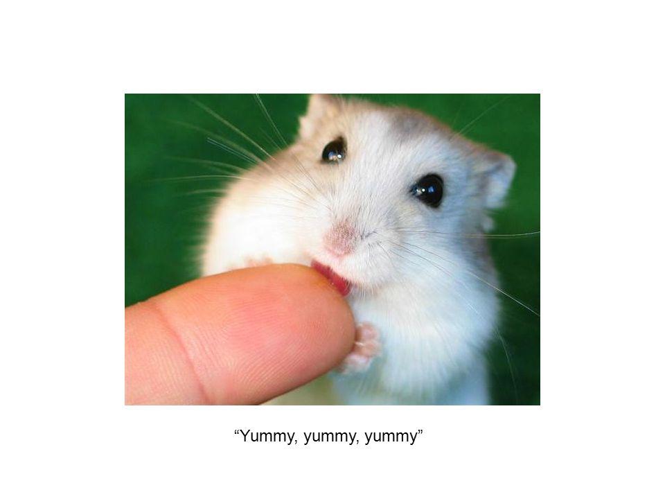 Yummy, yummy, yummy