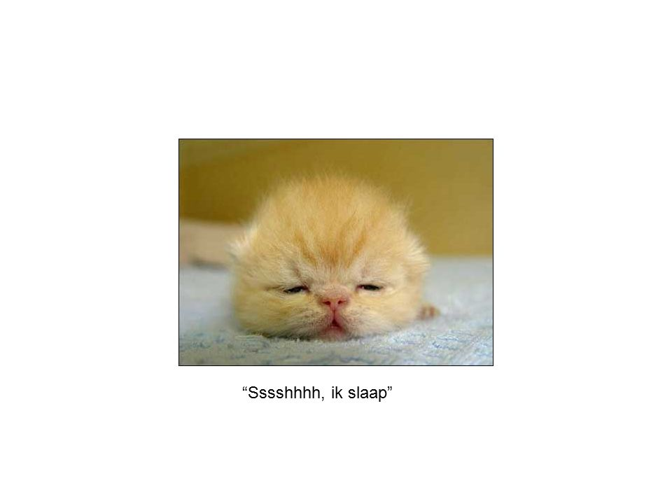 Sssshhhh, ik slaap
