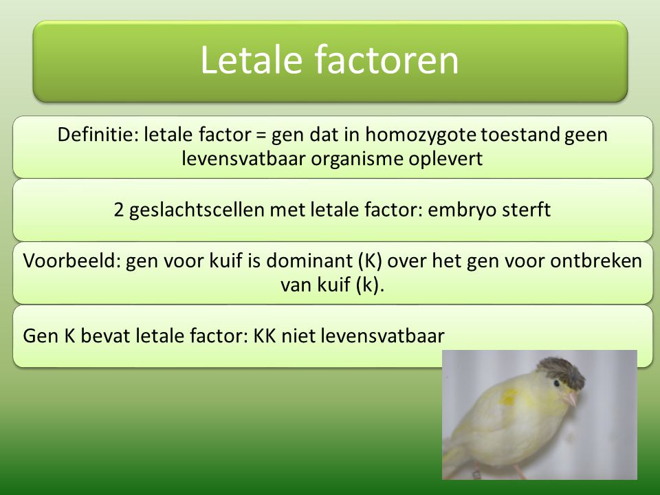 2 geslachtscellen met letale factor: embryo sterft