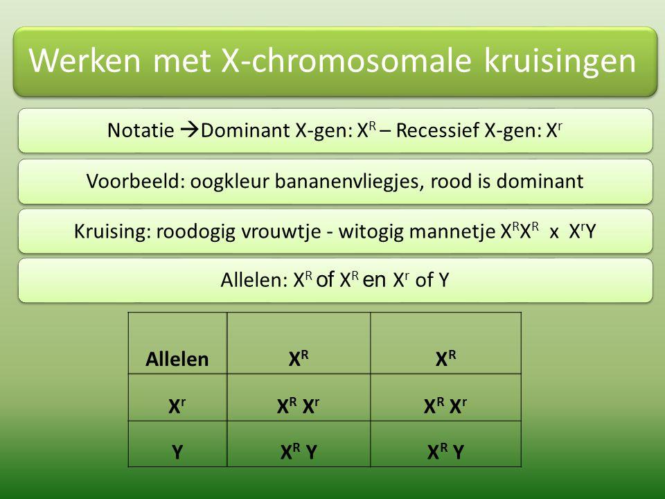 Werken met X-chromosomale kruisingen