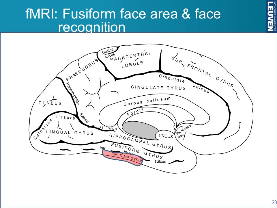 fMRI: Fusiform face area & face recognition