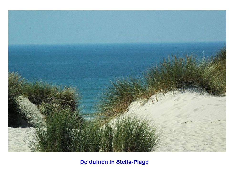 De duinen in Stella-Plage