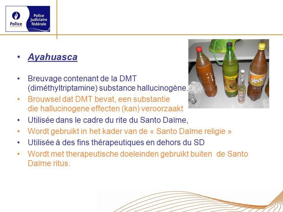 Ayahuasca Breuvage contenant de la DMT (diméthyltriptamine) substance hallucinogène.
