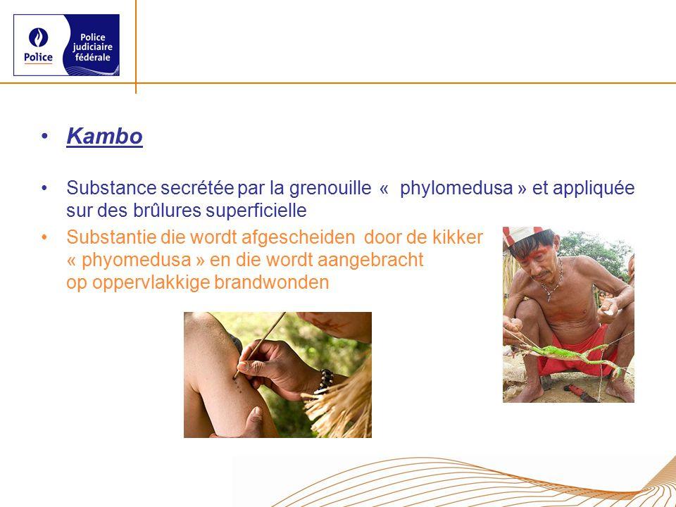 Kambo Substance secrétée par la grenouille « phylomedusa » et appliquée sur des brûlures superficielle.