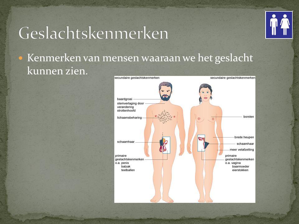Geslachtskenmerken Kenmerken van mensen waaraan we het geslacht kunnen zien.