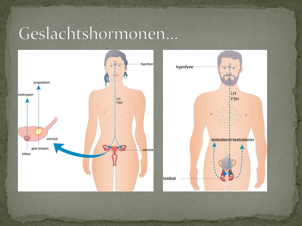 Geslachtshormonen…