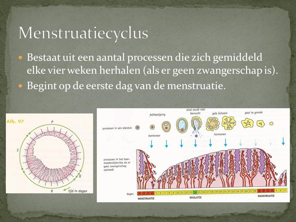 Menstruatiecyclus Bestaat uit een aantal processen die zich gemiddeld elke vier weken herhalen (als er geen zwangerschap is).