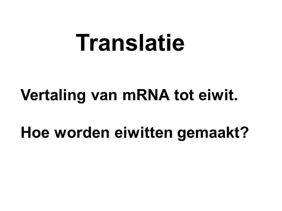 Translatie Vertaling van mRNA tot eiwit. Hoe worden eiwitten gemaakt