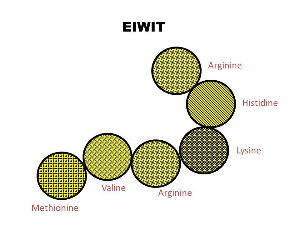 EIWIT Arginine Histidine Lysine Valine Arginine Methionine