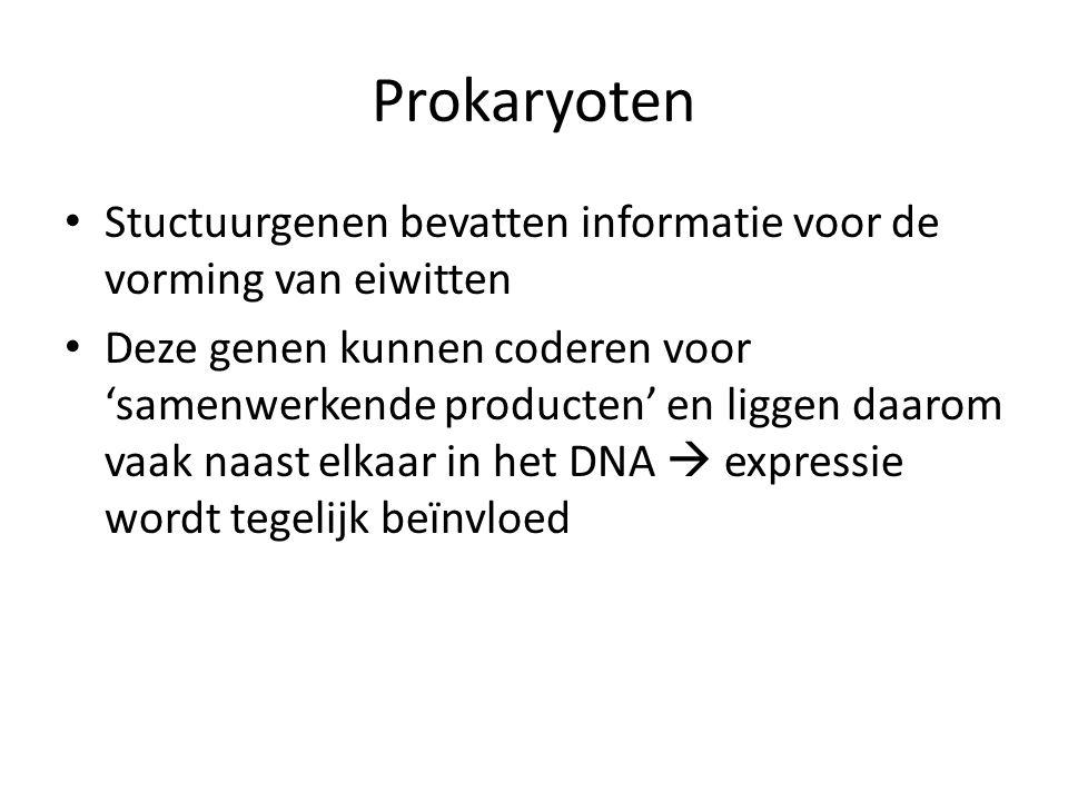 Prokaryoten Stuctuurgenen bevatten informatie voor de vorming van eiwitten.
