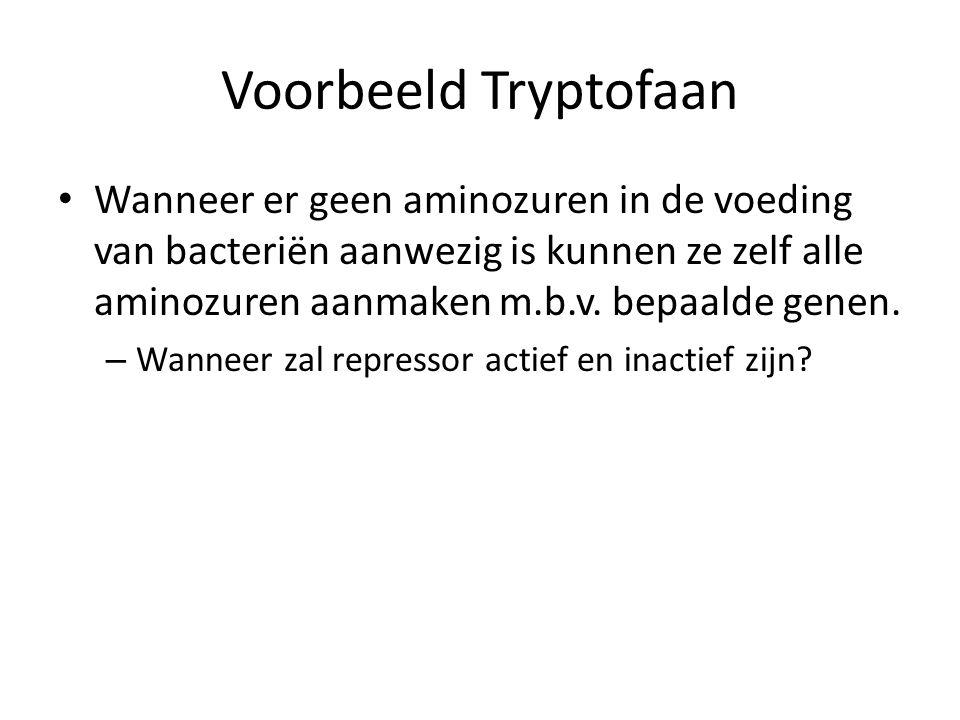 Voorbeeld Tryptofaan