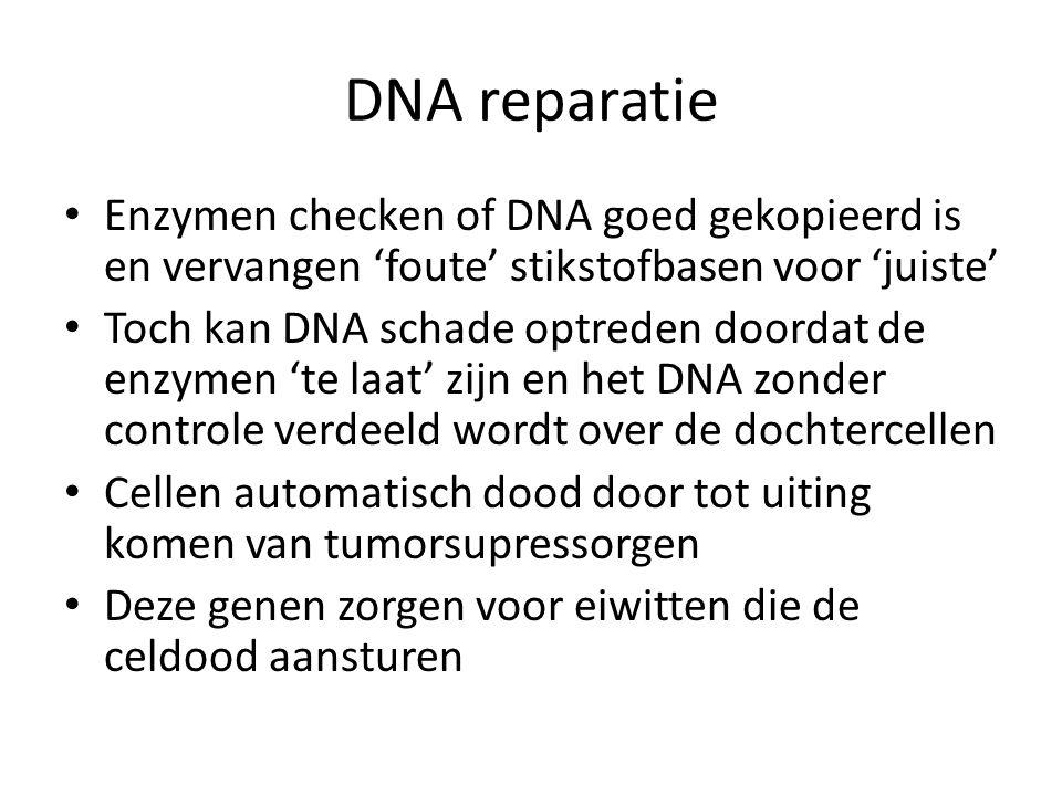 DNA reparatie Enzymen checken of DNA goed gekopieerd is en vervangen 'foute' stikstofbasen voor 'juiste'