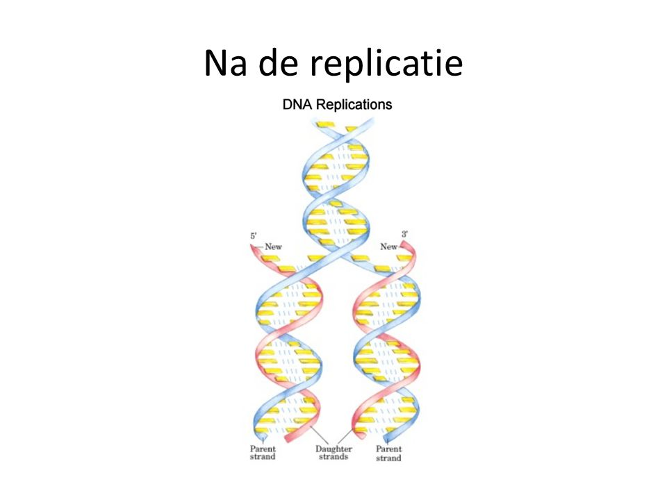 Na de replicatie