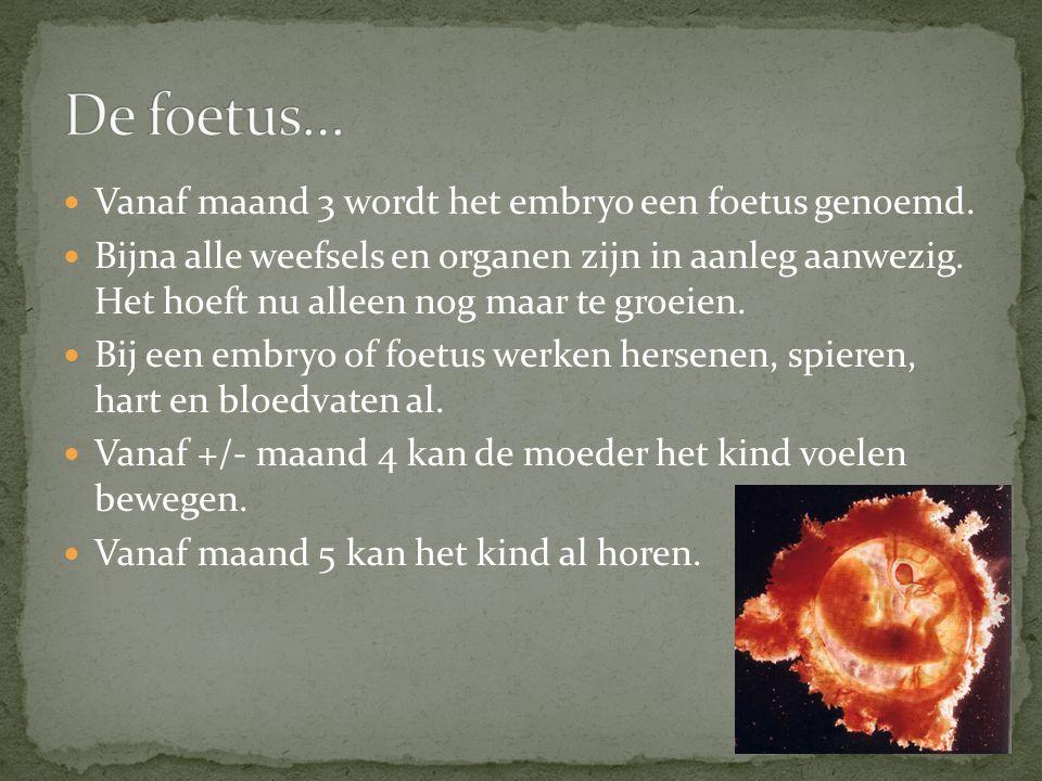 De foetus… Vanaf maand 3 wordt het embryo een foetus genoemd.