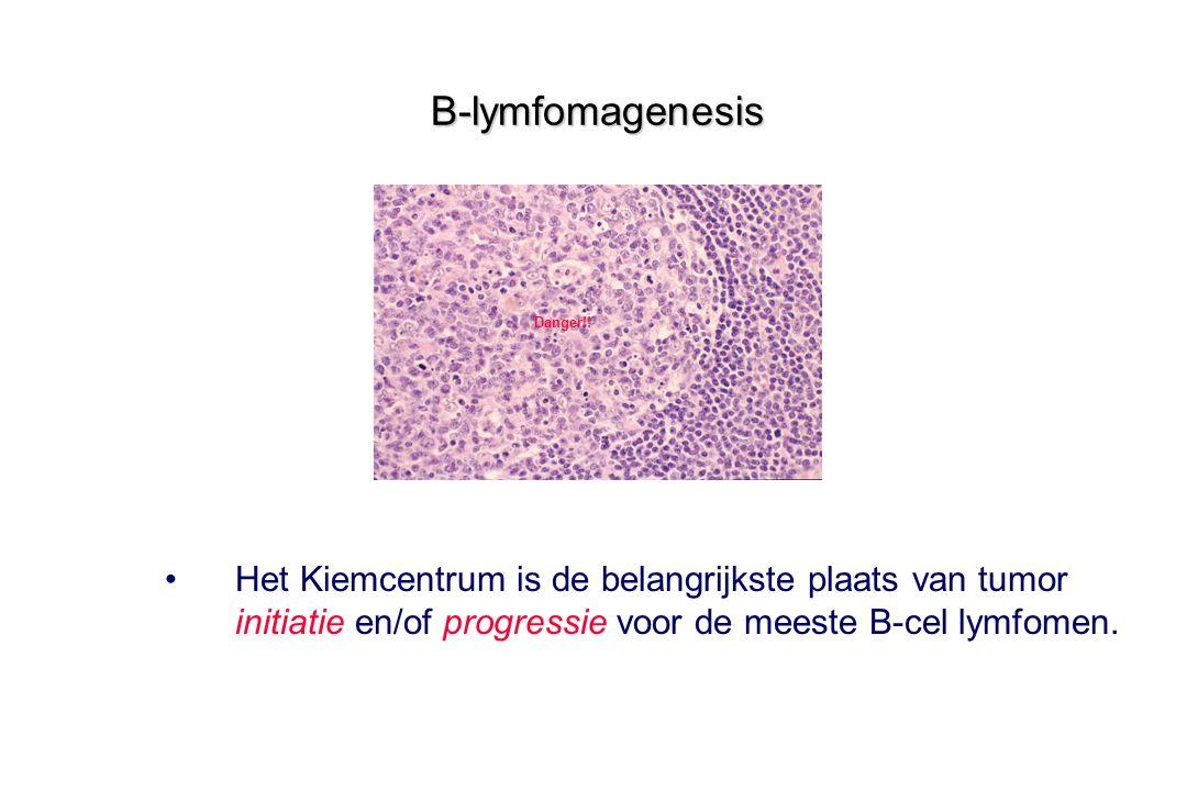 B-lymfomagenesis Danger!.