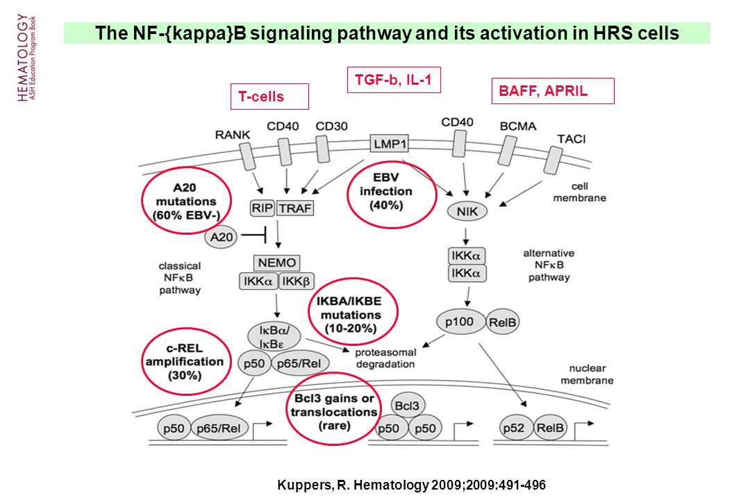 The NF-{kappa}B signaling pathway and its activation in HRS cells