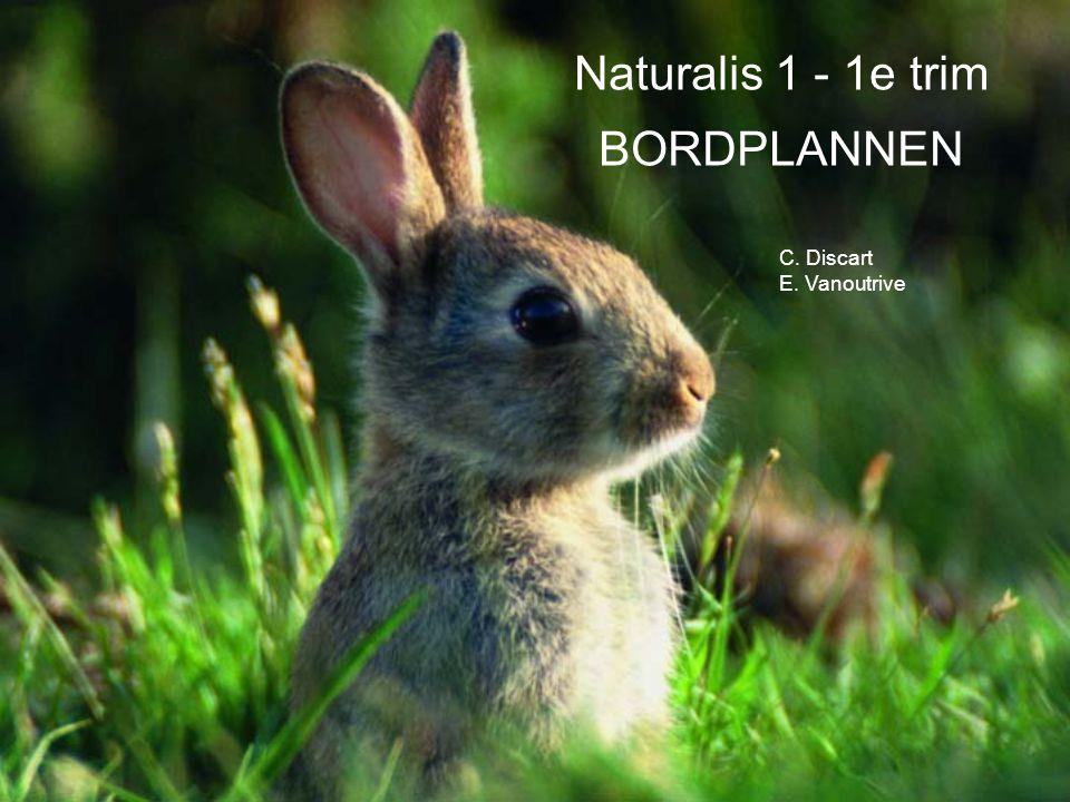 C. Discart E. Vanoutrive Naturalis 1 - 1e trim BORDPLANNEN