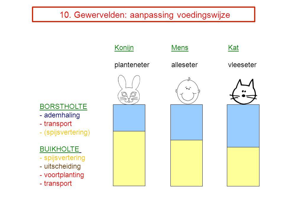 10. Gewervelden: aanpassing voedingswijze