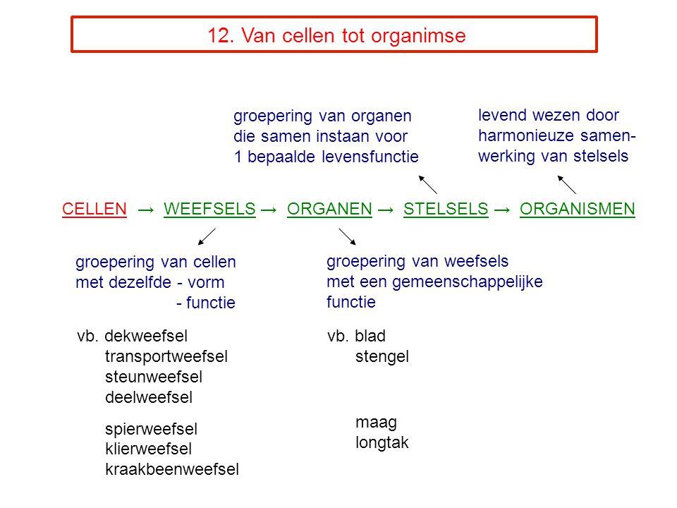 12. Van cellen tot organimse