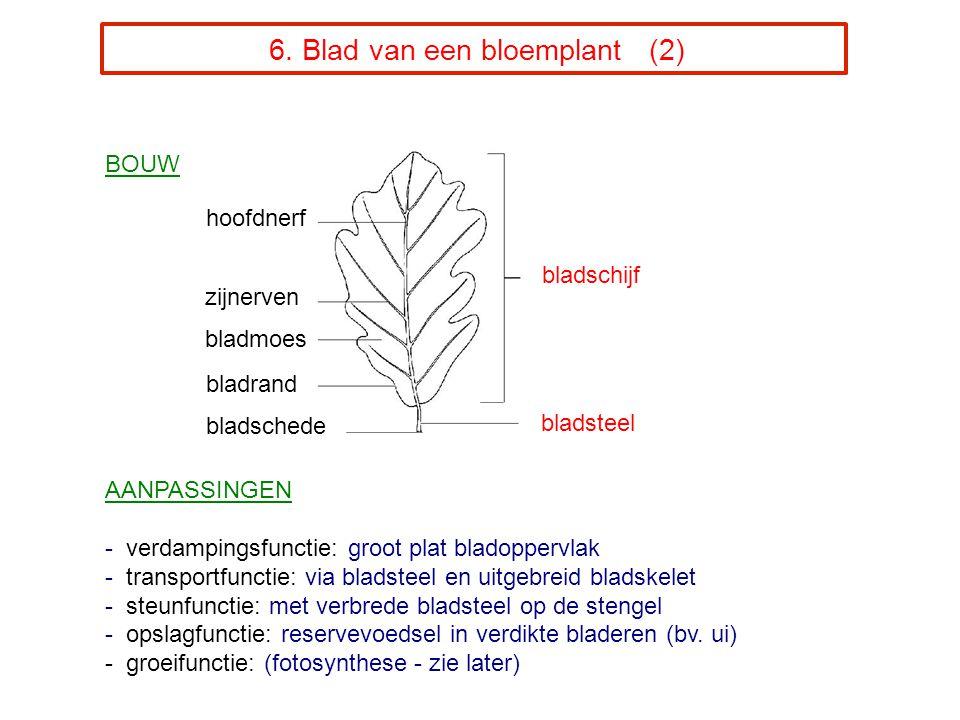 6. Blad van een bloemplant (2)