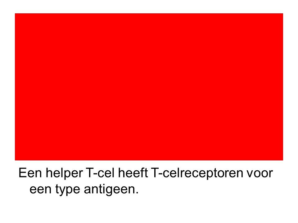 Een helper T-cel heeft T-celreceptoren voor een type antigeen.