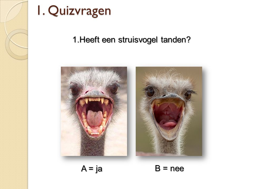 1.Heeft een struisvogel tanden
