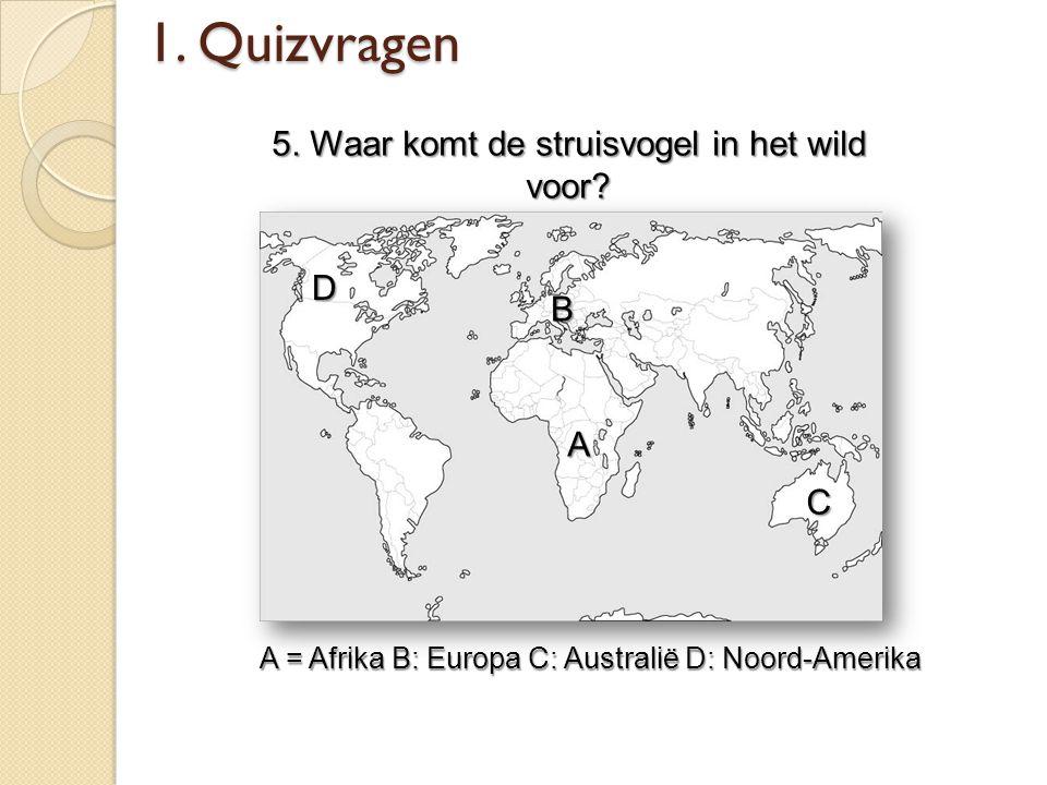1. Quizvragen 5. Waar komt de struisvogel in het wild voor D B A C
