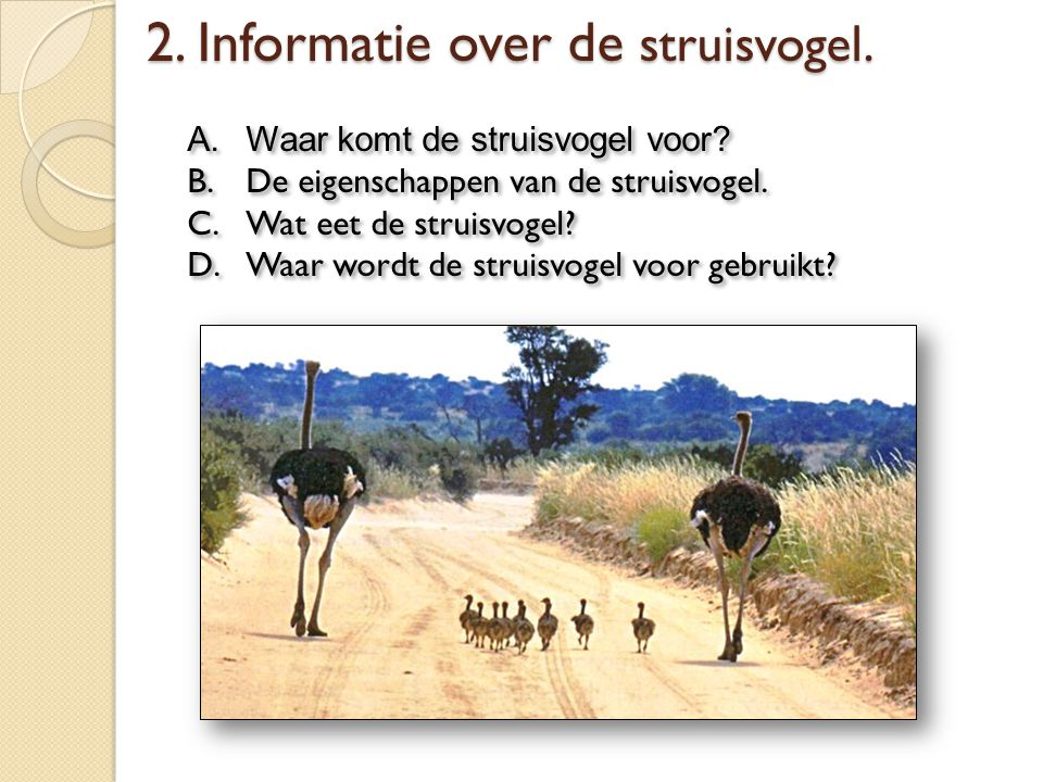 2. Informatie over de struisvogel.