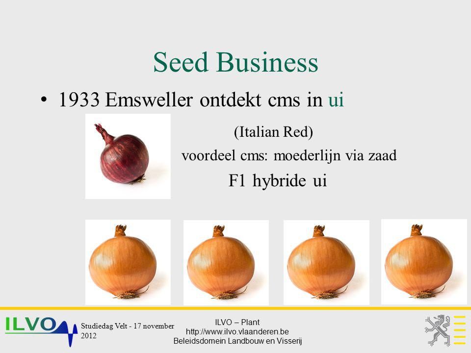 Seed Business 1933 Emsweller ontdekt cms in ui (Italian Red)
