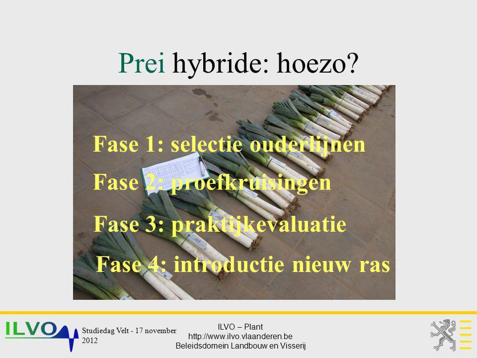 Prei hybride: hoezo Fase 1: selectie ouderlijnen