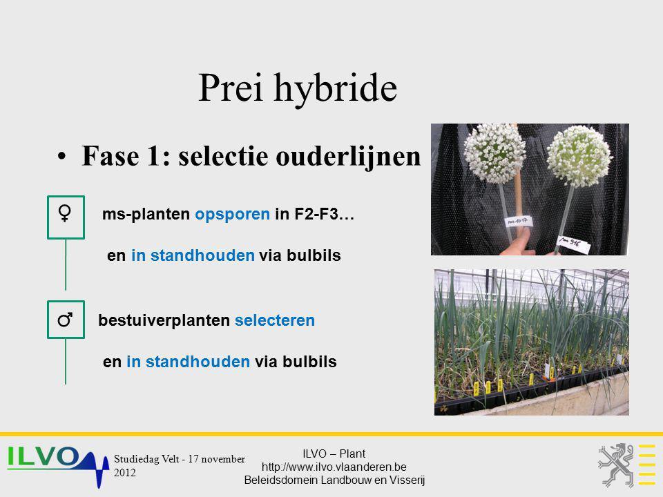 Prei hybride Fase 1: selectie ouderlijnen