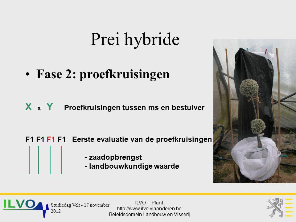 Prei hybride Fase 2: proefkruisingen