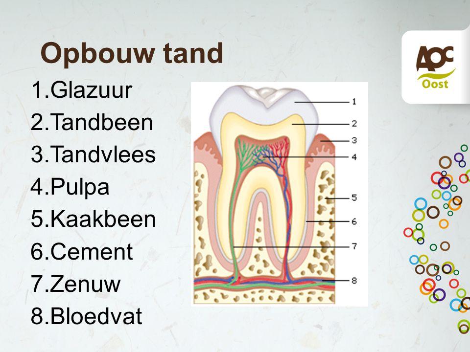 Opbouw tand Glazuur Tandbeen Tandvlees Pulpa Kaakbeen Cement Zenuw