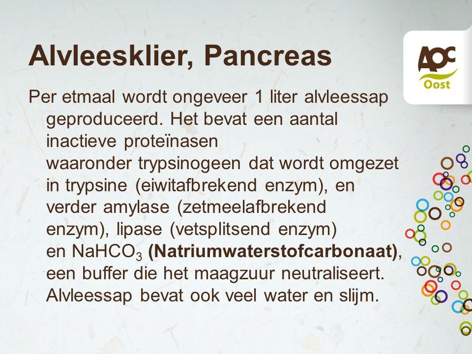 Alvleesklier, Pancreas