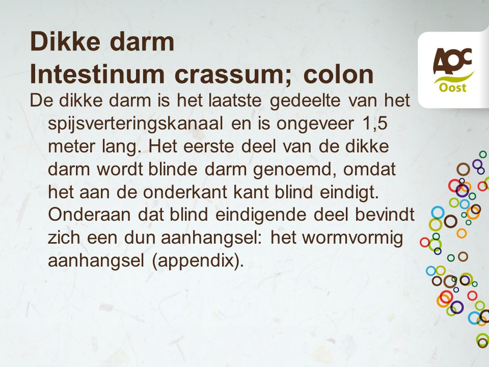Dikke darm Intestinum crassum; colon