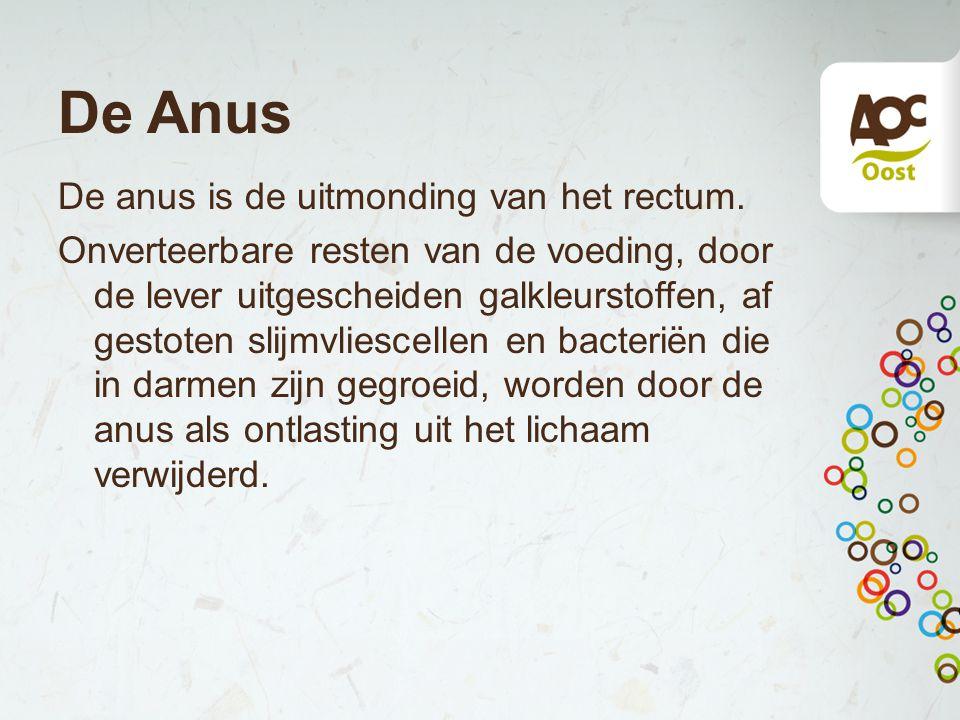 De Anus