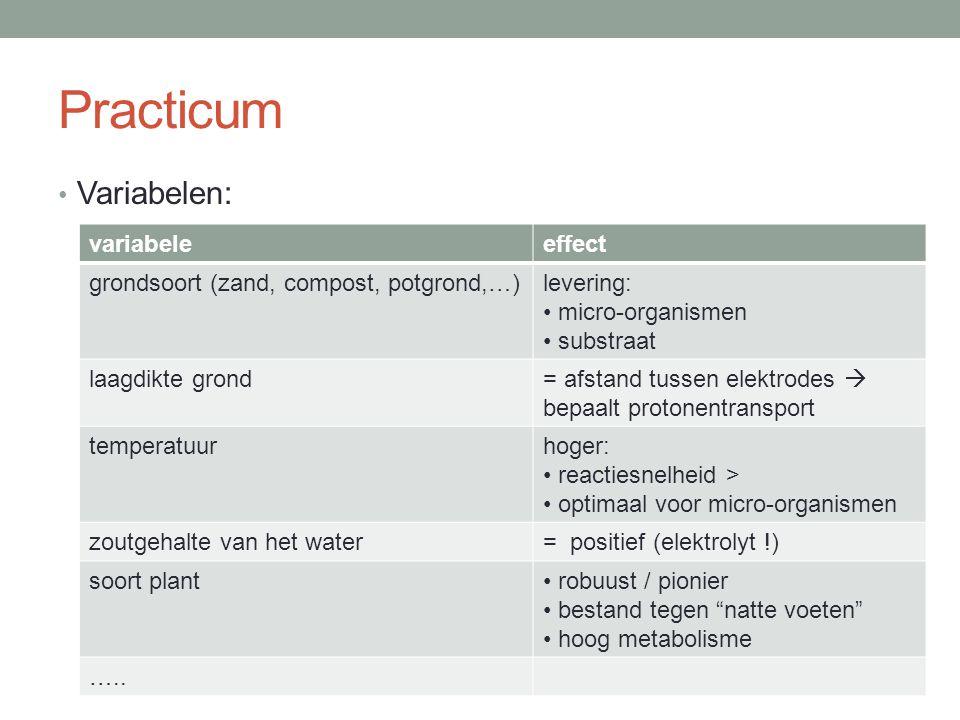 Practicum Variabelen: variabele effect