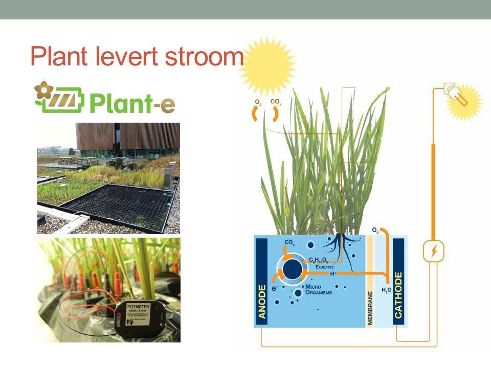 Plant levert stroom Link naar film plant-e in plaatje