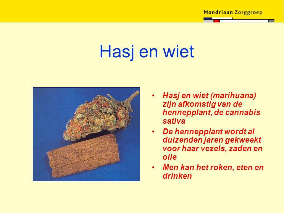 Hasj en wiet Hasj en wiet (marihuana) zijn afkomstig van de hennepplant, de cannabis sativa.