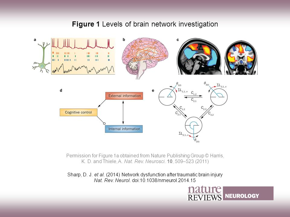 Figure 1 Levels of brain network investigation